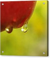 Waterdrop Sliding Off An Apple  Acrylic Print