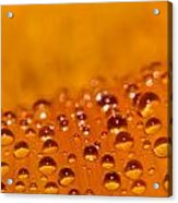 Waterdrops2 Acrylic Print by Amr Miqdadi