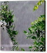 Watered By Nature Acrylic Print