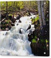 Waterfall By The Aspens Acrylic Print
