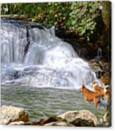 Waterfall Dogs Acrylic Print by Bob Jackson