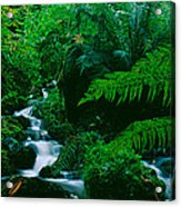 Waterfall In A Forest, Dartmoor, Devon Acrylic Print