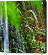 Waterfall Over Ferns Acrylic Print