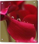Waterflower Drops Acrylic Print