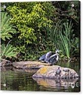 Waterfowl Pond Acrylic Print