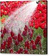 Watering The Garden Acrylic Print