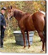 Watering The Horses Acrylic Print