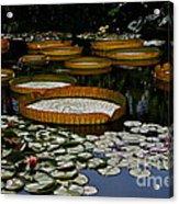 Waterlilies All Acrylic Print
