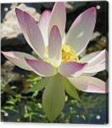 Waterlilies In Summer Acrylic Print