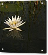 Waterlilly 5 Acrylic Print