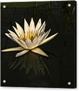 Waterlilly 6 Acrylic Print