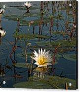 Waterlilly 8 Acrylic Print
