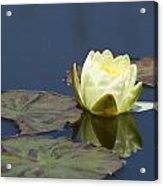 Waterlily One Acrylic Print