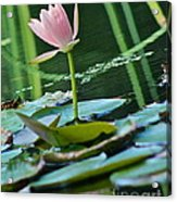 Waterlily Whimsy Acrylic Print