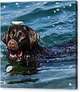 Waterlogged 2 Acrylic Print