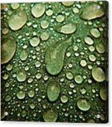 Raindrops On Watermelon Rind Acrylic Print