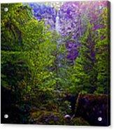Watson Falls Acrylic Print