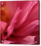 Wavelets Acrylic Print