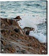 Waves Hitting The Rocks Acrylic Print