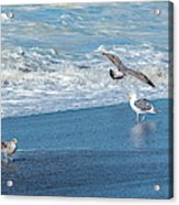Waves In The Pacific Ocean, Point Reyes Acrylic Print