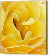 Waves Of Yellow Acrylic Print by Sabrina L Ryan