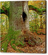 We Are Here Since 1000 Years 2 Acrylic Print