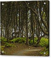 We Follow The Path II Acrylic Print by Jon Glaser