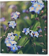 We Lay With The Flowers Acrylic Print
