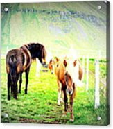 We Live Right Here Inside This Fence And Under This Big Mountain  Acrylic Print