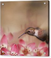 We Love Those Lilies Acrylic Print