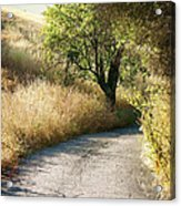 We Will Walk This Path Together Acrylic Print