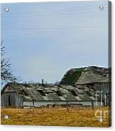 Weathered Barns Acrylic Print by Alys Caviness-Gober
