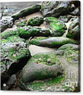 Weathered By Tides Acrylic Print