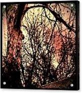 Web Of Tree Mauve Acrylic Print