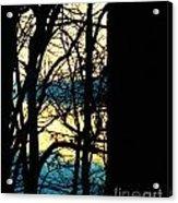 Web Acrylic Print by Sharon Costa