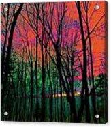 Webbs Woods Sunset Acrylic Print