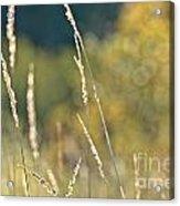 Weeds And Bokeh Acrylic Print