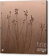 Weeds In The Fog Acrylic Print