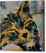 Weeeeeee Sleepee Acrylic Print by Paul Lovering