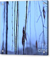 Weeping Forest Frost Acrylic Print