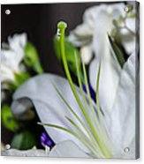 Weeping Lily Acrylic Print