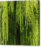 Weeping Willow Tree Enchantment  Acrylic Print