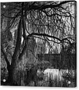 Weeping Willow Tree Acrylic Print by Ian Barber