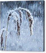 Weight Of Winter Acrylic Print
