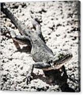 Weird Lizard Acrylic Print