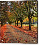 Welcome Home Bradford Pear Lined Drive-way Acrylic Print