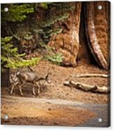 Welcome Home - Sequoia National Forest Acrylic Print