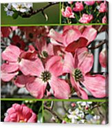 Welcome Spring Collage Acrylic Print