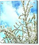 Welcome Vintage Spring Acrylic Print
