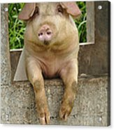 Well Hello There Acrylic Print by Bob Christopher